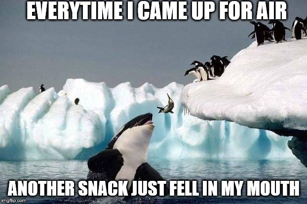 EVERYTIME I CAME UP FOR AIR ANOTHER SNACK JUST FELL IN MY MOUTH | made w/ Imgflip meme maker