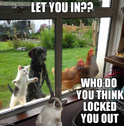 Grumpy doesn't play well with others | LET YOU IN?? WHO DO YOU THINK LOCKED YOU OUT | image tagged in grumpy cat,dog,cat,chicken | made w/ Imgflip meme maker