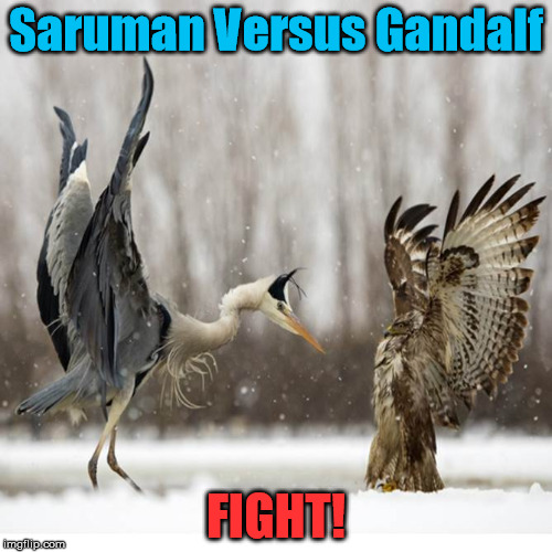 Lord of the Wings | Saruman Versus Gandalf FIGHT! | image tagged in saruman,gandalf,the lord of the rings | made w/ Imgflip meme maker
