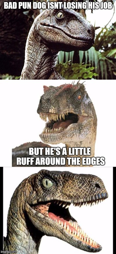 Bad Pun Velociraptor | BAD PUN DOG ISNT LOSING HIS JOB BUT HE'S A LITTLE RUFF AROUND THE EDGES | image tagged in bad pun velociraptor | made w/ Imgflip meme maker