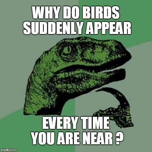 Philosoraptor Meme | WHY DO BIRDS SUDDENLY APPEAR EVERY TIME YOU ARE NEAR ? | image tagged in memes,philosoraptor | made w/ Imgflip meme maker