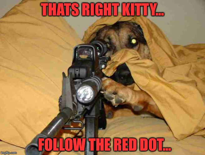 Not a repost... | THATS RIGHT KITTY... FOLLOW THE RED DOT... | image tagged in sniper,dog,red dot,cats,funny,memes | made w/ Imgflip meme maker