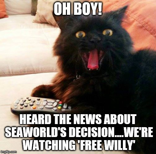 OH BOY! Cat: On SeaWorld |  OH BOY! HEARD THE NEWS ABOUT SEAWORLD'S DECISION....WE'RE WATCHING 'FREE WILLY' | image tagged in oh boy cat,meme,orca,seaworld,free willy,news | made w/ Imgflip meme maker