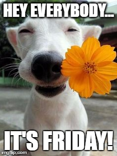 Hey Everybody... It's FRIDAY! | HEY EVERYBODY... IT'S FRIDAY! | image tagged in smiling dog,happy dog | made w/ Imgflip meme maker