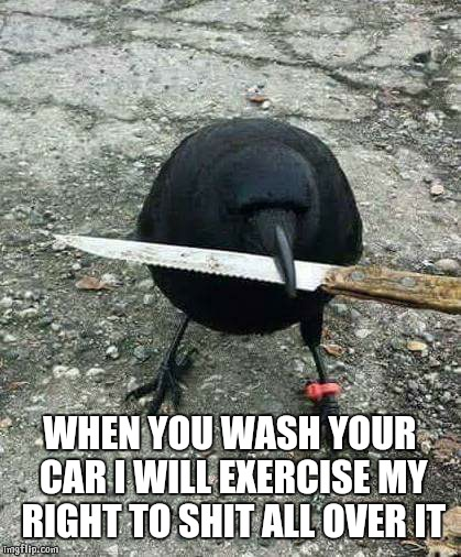 hood bird | WHEN YOU WASH YOUR CAR I WILL EXERCISE MY RIGHT TO SHIT ALL OVER IT | image tagged in hood bird | made w/ Imgflip meme maker