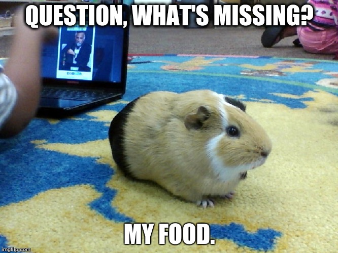Guinea Pigs Need Food |  QUESTION, WHAT'S MISSING? MY FOOD. | image tagged in guinea pig,food,greedy,missing | made w/ Imgflip meme maker