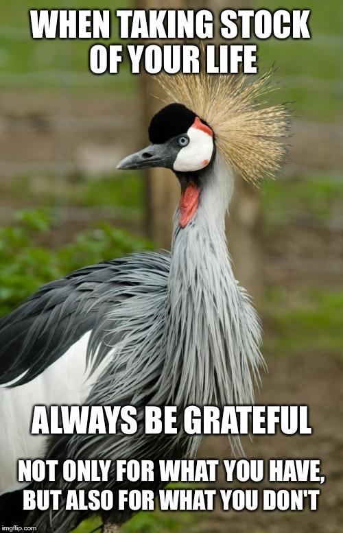 Grateful Memes Gifs Imgflip