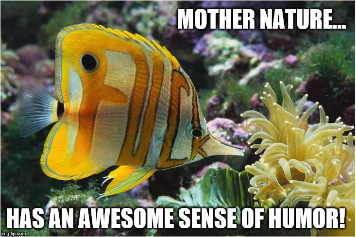 Mother Nature's Funny! | MOTHER NATURE… HAS AN AWESOME SENSE OF HUMOR! | image tagged in mother nature,fuck,tropical fish,humor,awesome | made w/ Imgflip meme maker