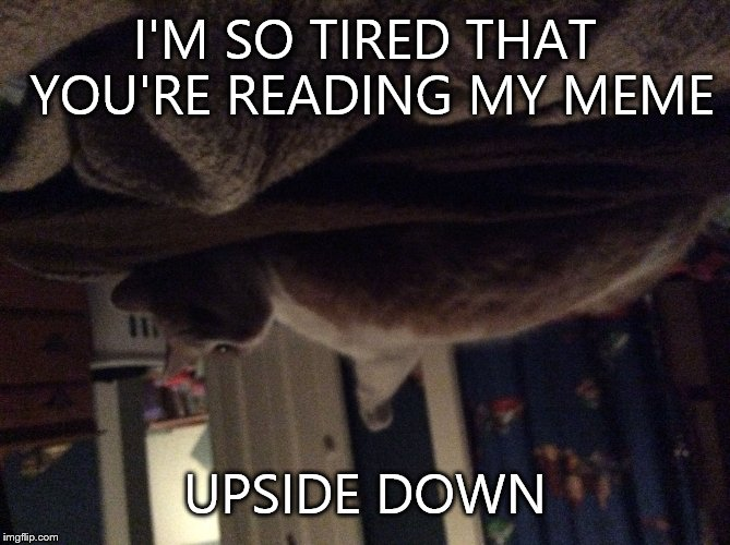 Image tagged in i tired - Imgflip