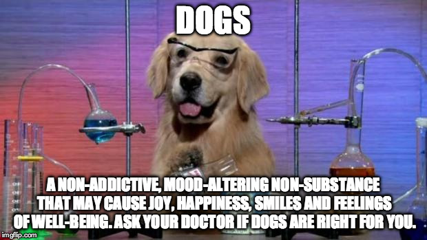 Chemistry Dog | DOGS A NON-ADDICTIVE, MOOD-ALTERING NON-SUBSTANCE THAT MAY CAUSE JOY, HAPPINESS, SMILES AND FEELINGS OF WELL-BEING. ASK YOUR DOCTOR IF DOGS  | image tagged in chemistry dog | made w/ Imgflip meme maker