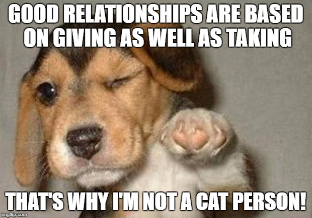 And That Is Why I M Not A Cat Person Jpg