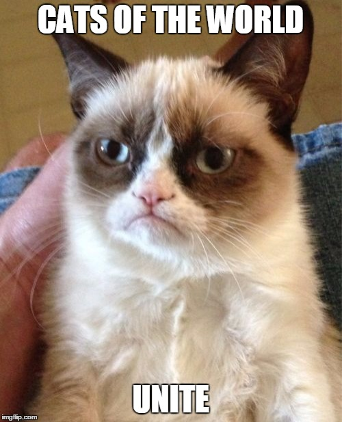 Grumpy Cat Meme | CATS OF THE WORLD UNITE | image tagged in memes,grumpy cat | made w/ Imgflip meme maker