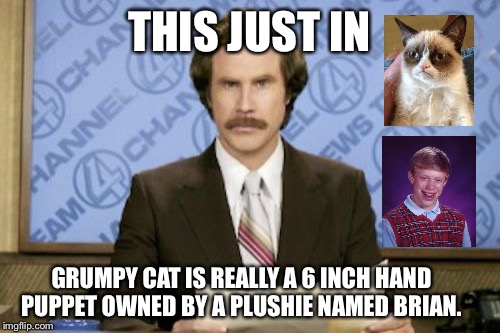 Breaking news... Beloved icon unmasked | THIS JUST IN GRUMPY CAT IS REALLY A 6 INCH HAND PUPPET OWNED BY A PLUSHIE NAMED BRIAN. | image tagged in memes,ron burgundy,grumpy cat,bad luck brian | made w/ Imgflip meme maker