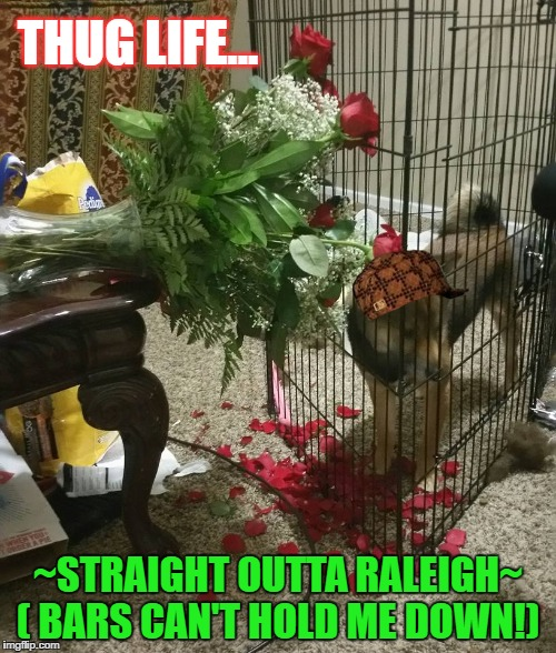 Sarah's Thug | THUG LIFE... ~STRAIGHT OUTTA RALEIGH~ ( BARS CAN'T HOLD ME DOWN!) | image tagged in thuglife,baddog,straight outta compton,straight outta,funny dogs | made w/ Imgflip meme maker