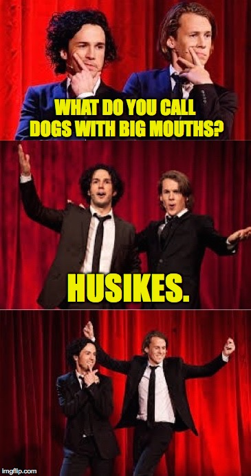 WHAT DO YOU CALL DOGS WITH BIG MOUTHS? HUSIKES. | image tagged in bad pul ylvis | made w/ Imgflip meme maker