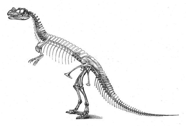 Dinosaur Skeleton Blank Template