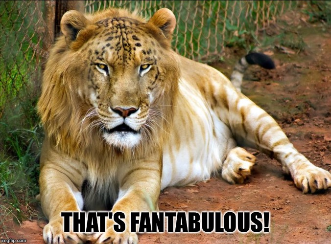 LEOPON | THAT'S FANTABULOUS! | image tagged in leopon | made w/ Imgflip meme maker