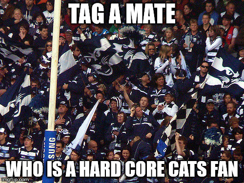 geelong cats |  TAG A MATE; WHO IS A HARD CORE CATS FAN | image tagged in afl | made w/ Imgflip meme maker