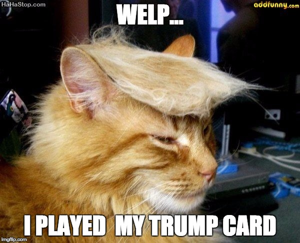 donald trump cat |  WELP... I PLAYED  MY TRUMP CARD | image tagged in donald trump cat | made w/ Imgflip meme maker