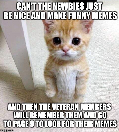Why can't we be fwends....why can't we be fwends..... |  CAN'T THE NEWBIES JUST BE NICE AND MAKE FUNNY MEMES; AND THEN THE VETERAN MEMBERS WILL REMEMBER THEM AND GO TO PAGE 9 TO LOOK FOR THEIR MEMES | image tagged in memes,cute cat,friends | made w/ Imgflip meme maker