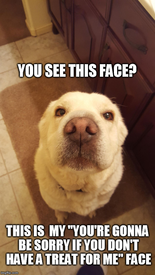 "Cute Dog | YOU SEE THIS FACE? THIS IS  MY ""YOU'RE GONNA BE SORRY IF YOU DON'T HAVE A TREAT FOR ME"" FACE 