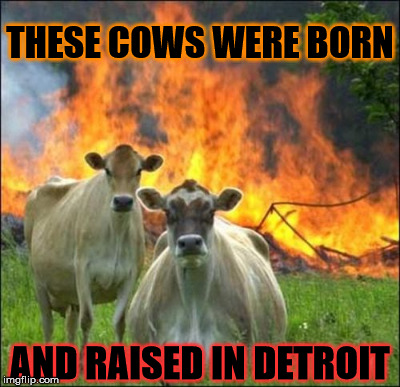 THESE COWS WERE BORN AND RAISED IN DETROIT | made w/ Imgflip meme maker