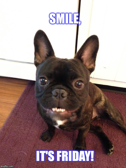 Happy dog |  SMILE, IT'S FRIDAY! | image tagged in french bulldog | made w/ Imgflip meme maker
