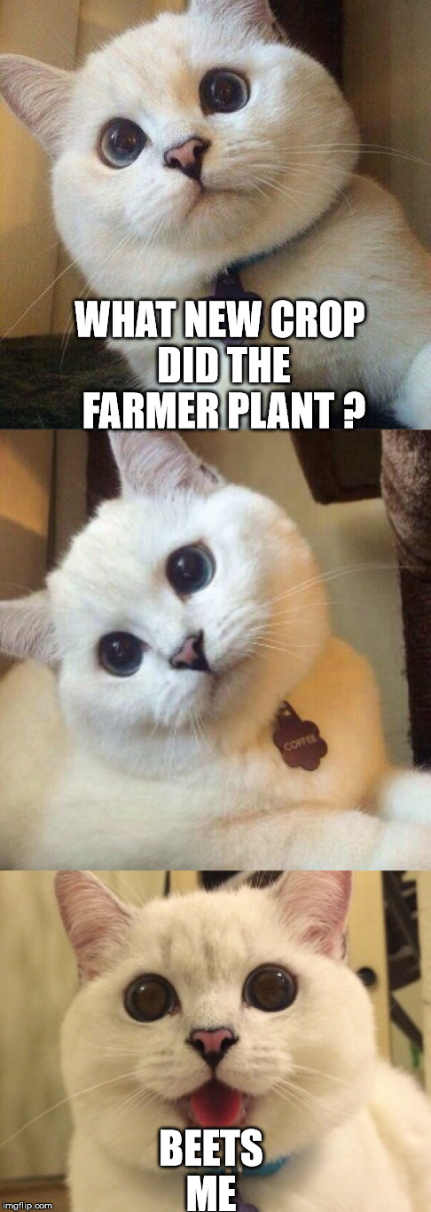 WHAT NEW CROP DID THE FARMER PLANT ? BEETS ME | made w/ Imgflip meme maker