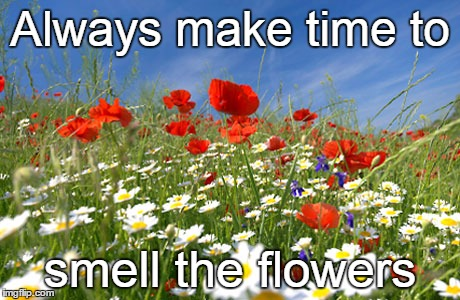 Flowers |  Always make time to; smell the flowers | image tagged in self help,flower power,may flowers | made w/ Imgflip meme maker