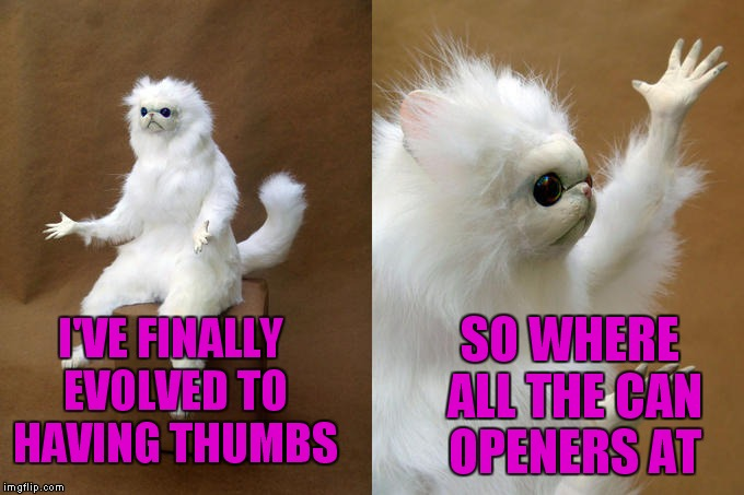 Opposable thumbs |  SO WHERE ALL THE CAN OPENERS AT; I'VE FINALLY EVOLVED TO HAVING THUMBS | image tagged in persian cat room guardian | made w/ Imgflip meme maker