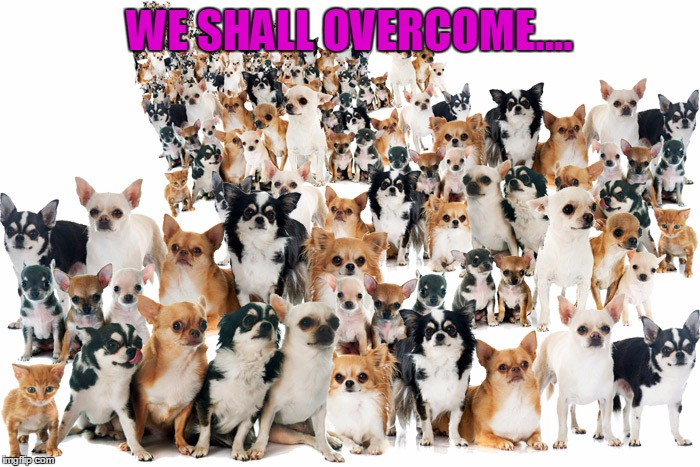 WE SHALL OVERCOME.... | made w/ Imgflip meme maker