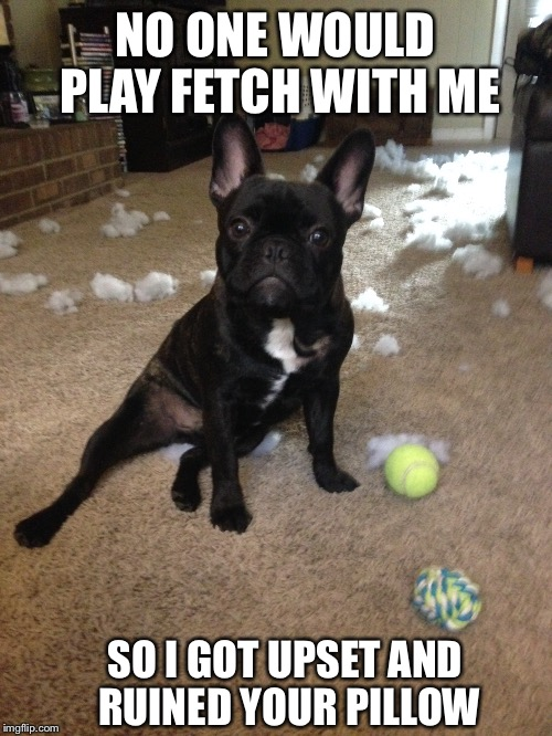 Naughty French Bulldog |  NO ONE WOULD PLAY FETCH WITH ME; SO I GOT UPSET AND RUINED YOUR PILLOW | image tagged in french bulldog,frenchie | made w/ Imgflip meme maker