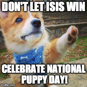 Don't let ISIS win. |  DON'T LET ISIS WIN; CELEBRATE NATIONAL PUPPY DAY! | image tagged in puppy corgi,memes,truth,puppy,dragon | made w/ Imgflip meme maker