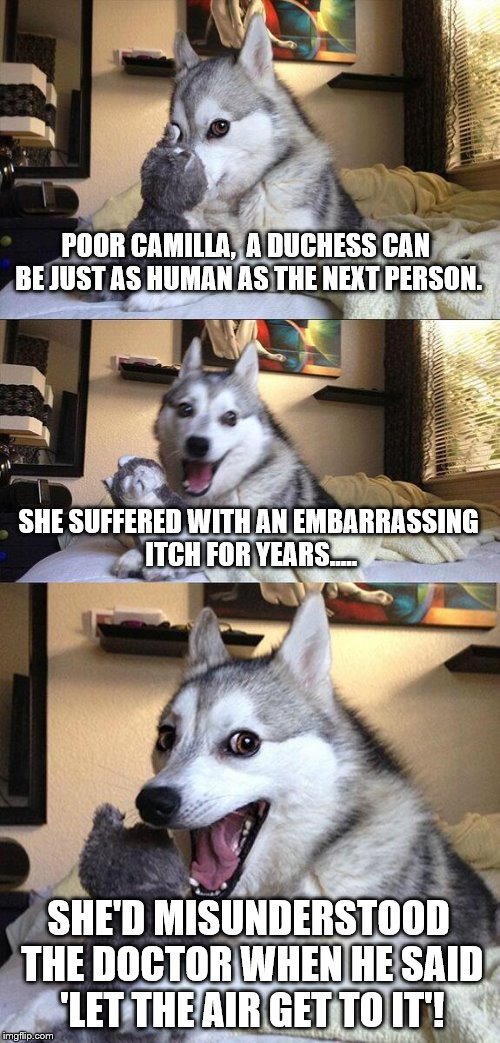 To 'HEIR' is human..... | POOR CAMILLA,  A DUCHESS CAN BE JUST AS HUMAN AS THE NEXT PERSON. SHE SUFFERED WITH AN EMBARRASSING ITCH FOR YEARS..... SHE'D MISUNDERSTOOD  | image tagged in memes,bad pun dog,funny memes,british royals,royals,female | made w/ Imgflip meme maker