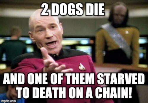 Picard Wtf Meme | 2 DOGS DIE AND ONE OF THEM STARVED TO DEATH ON A CHAIN! | image tagged in memes,picard wtf | made w/ Imgflip meme maker