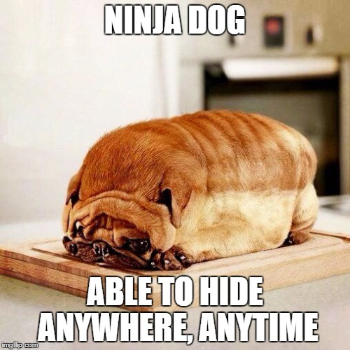 NINJA DOG ABLE TO HIDE ANYWHERE, ANYTIME | made w/ Imgflip meme maker