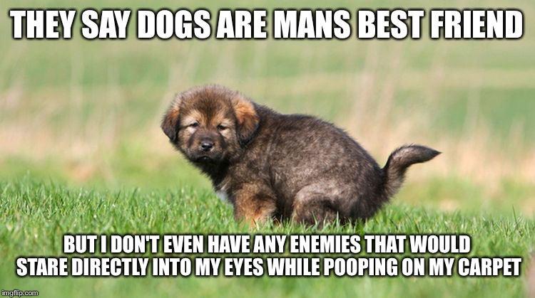 "Mans ""best friend"" 