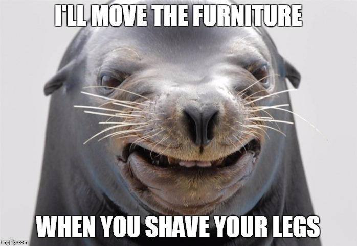happy seal | I'LL MOVE THE FURNITURE WHEN YOU SHAVE YOUR LEGS | image tagged in happy seal | made w/ Imgflip meme maker