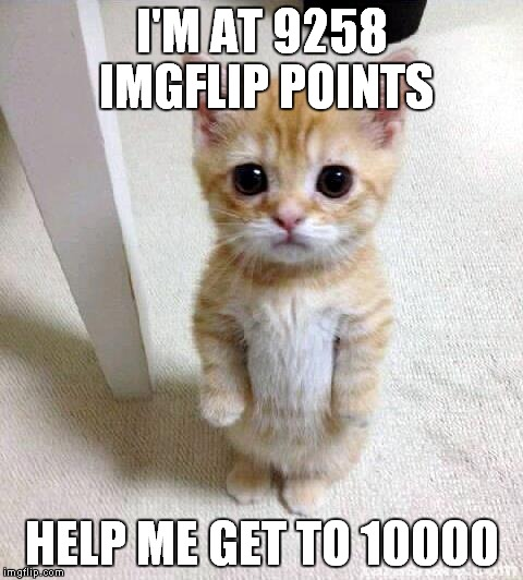 Cute Cat Meme | I'M AT 9258 IMGFLIP POINTS HELP ME GET TO 10000 | image tagged in memes,cute cat | made w/ Imgflip meme maker