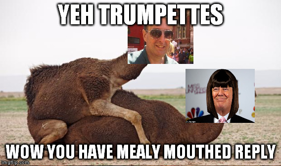 11ettg camel imgflip