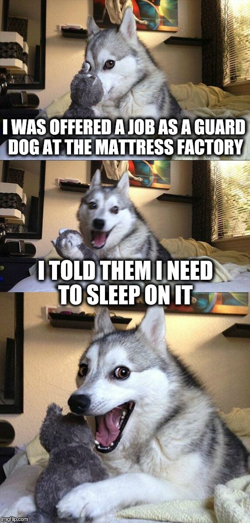 Big decision for Bad Pun Dog. | I WAS OFFERED A JOB AS A GUARD DOG AT THE MATTRESS FACTORY I TOLD THEM I NEED TO SLEEP ON IT | image tagged in memes,bad pun dog,job,guard,sleep | made w/ Imgflip meme maker