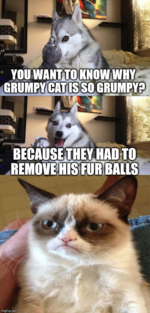grumpy cats fur balls  |  YOU WANT TO KNOW WHY GRUMPY CAT IS SO GRUMPY? BECAUSE THEY HAD TO REMOVE HIS FUR BALLS | image tagged in memes,bad pun dog,grumpy cat,fur,balls | made w/ Imgflip meme maker