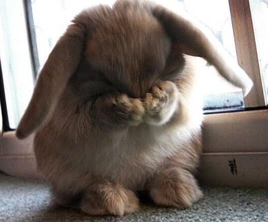 u0026quot bunny u0026quot  meme templates