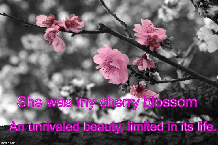 A Thousand Boy Kisses by Tillie Cole | She was my cherry blossom An unrivaled beauty, limited in its life. | image tagged in rune,poppy,love,boy kisses,thousand boy kisses,cherry blossom | made w/ Imgflip meme maker