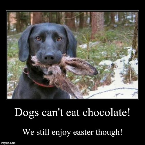 Dogs Who Can Eat Chocolate