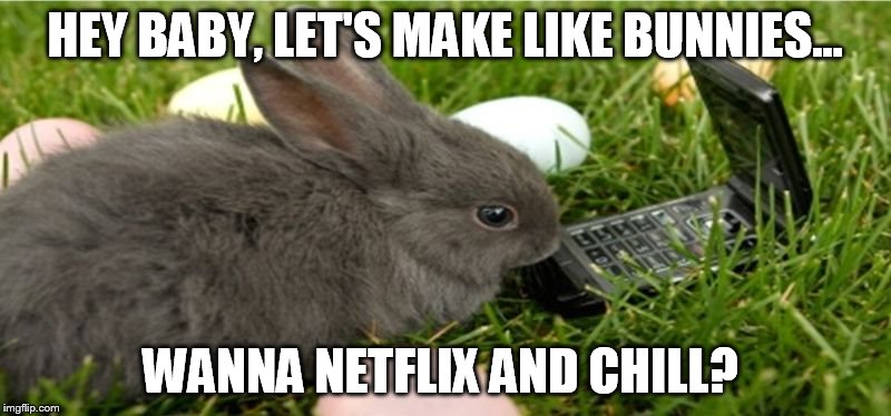 Bunny Meme 2 Imgflip
