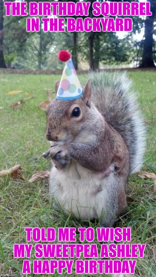 Super Birthday Squirrel Meme | THE BIRTHDAY SQUIRREL IN THE BACKYARD TOLD ME TO WISH MY SWEETPEA ASHLEY A HAPPY BIRTHDAY | image tagged in memes,super birthday squirrel | made w/ Imgflip meme maker