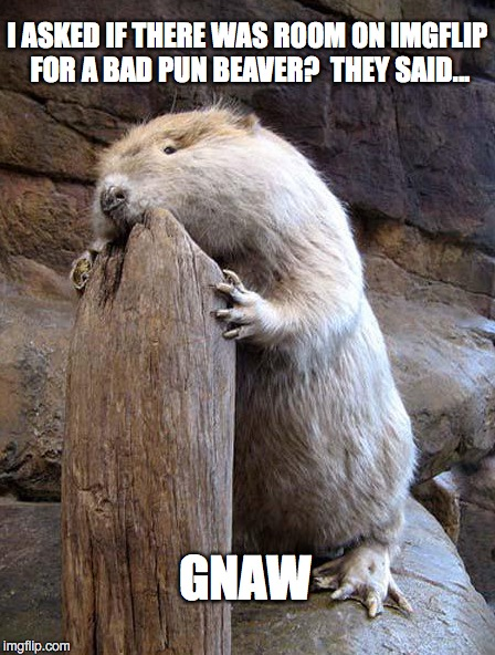 Bad Pun Beaver | I ASKED IF THERE WAS ROOM ON IMGFLIP FOR A BAD PUN BEAVER?  THEY SAID... GNAW | image tagged in bad pun dog,bad pun anna kendrick | made w/ Imgflip meme maker
