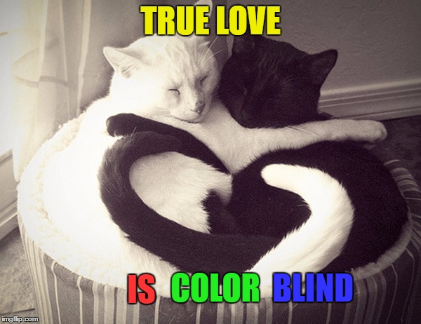 Racism Stinks | TRUE LOVE IS COLOR BLIND | image tagged in love,cats,memes,beautiful | made w/ Imgflip meme maker
