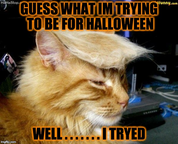 donald trump cat |  GUESS WHAT IM TRYING TO BE FOR HALLOWEEN; WELL . . . . . . . I TRYED | image tagged in donald trump cat | made w/ Imgflip meme maker